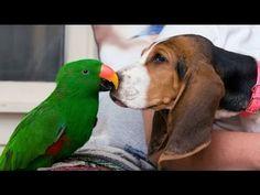 Komik Papağanlar Ve Sıkıcı Köpekler!