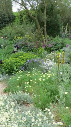 Love garden paths - so my HUGE pile of mulch will now become paths on my property. I love the wild Mullen here - one of my favorite herbs Rockery Garden, Dry Garden, Gravel Garden, Garden Shrubs, Garden Paths, Front Gardens, Outdoor Gardens, Beth Chatto, Meadow Garden