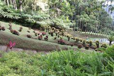 Jardin de Balata.