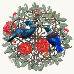 The little GALLERY of fine ARTS: Tui in the Pohutukawa IV art print.