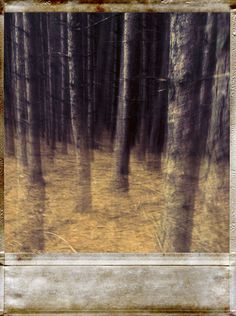 """Polaroid forest"" Picture by Jean-Francois Dupuis posters, art prints, canvas prints, greeting cards or gallery prints. Find more Picture art prints and posters in the ARTFLAKES shop. Forest Pictures, Art Prints Online, Polaroid Pictures, Buy Posters, Creations, Canvas Prints, Fine Art, Gallery, Artwork"