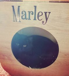 Awww Marley is a gorgeous house panther  we're so pleased he likes his pod and catnip  yay! Thank you so much for sharing   #cat #catsofinstagram #cats_of_instagram #catfurnature #catfurniture #catsinboxes #cattoy #INSTACAT_MEOWS #cutecat #PurrMachine #catsinboxes #catbox #Excellent_Cats #BestMeow #dailykittymail #thecatniptimes #catcube #catpod #ArchNemesis #FlyingArchNemesis #myindoorpaws #ififitsisits #cutecatcrew #catchalet #catnip #themeowdaily #kitty #dailykittymail #catgrass