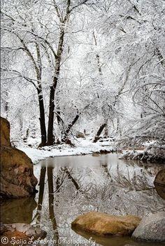 Beauty of nature at Christmas