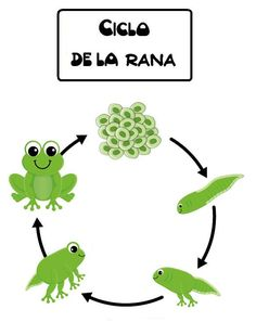 Resultado de imagen de la rana educacion infantil Spanish Teaching Resources, Pond Life, Hands On Activities, Spanish Language, Kindergarten, Homeschool, Projects To Try, English Lessons, Activities