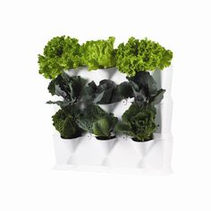 Verticaal tuinieren met Minigarden. Eenvoudig op te bouwen met losse modules. Handig voor het kweken van kleine groenten en fruit zoals sla, aardbeien en kruiden. http://www.bloempotwebshop.nl/index.php?p=1&sc=18