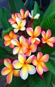 plumeria....bought some of these seeds and super excited to grow them!!!
