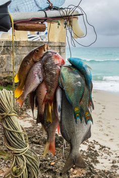 Today's catch . Cuba Necesitas tu pasaporte cubano, te lo tenemos en tus  manos en menos de 2 meses. llamanos al 305.504.5017