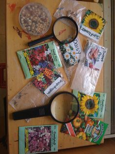 Science/discovery table.  Follow this up with spring planting of flowers or even grass in a potato head or paper cup.