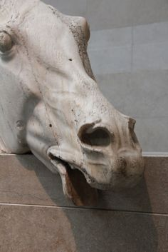 Horse head sculpture from The Parthenon in Greece.  These beautiful marble sculptures were stolen by Lord Elgin in 1803. They now reside at the British Museum and Greece wants them back!