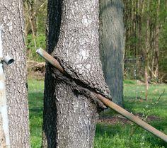 one hungry tree