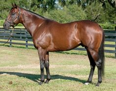 In Summation, b. st. 2003. Sired by Put It Back, who goes back to Kentucky-based Relaunch, his Florida-based sire In Reality, and his sire, Florida-based Intentionally. This is the male line of Man o' War, which has had a dual resurgence through In Reality and in particular his son Relaunch, who also sired Cee's Tizzy, the sire of Horse of the Year Tiznow, now a leading stallion. In addition, Relaunch sired Breeders' Cup Classic winner Skywalker, sire of champion Bertrando, a leader in CA,