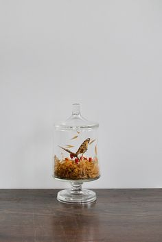 vintage preserved butterfly in glass jar / www.adoredvintage.com