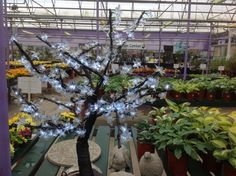 Everyone loves our huge blossom lit trees. So we now have them on a smaller scale and they are so impressive. Tree Lighting, Scale, Trees, Gardening, Country, Plants, Weighing Scale, Rural Area, Tree Structure