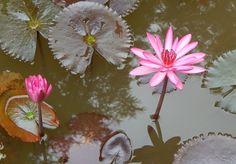 Gartenteich Schlammsauger ✓ Sie möchten Teichschlamm entfernen? ✓ Dann finden Sie hier den Testsieger + Preisvergleiche + Die Top Produkte ✓ klares Teich ✓