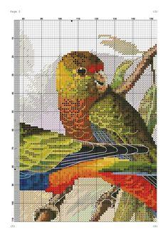 Parrots Page 2 Cross Stitch Bird, Cross Stitch Animals, Cross Stitch Designs, Cross Stitching, Cross Stitch Embroidery, Embroidery Patterns, Cross Stitch Patterns, Pet Birds, Needlepoint