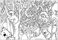 Count the koalas puzzle and colouring page, koalas in eucalyptus tree many printables on site