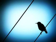 Blackbird Blackbird Singing, Broken Wings, Crows Ravens, Learn To Fly, Waiting, Learning, Photography, Animals, Ravens