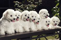 Training Multiple Puppies at the Same Time