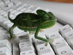 120 mejores im genes de camale n chameleons lizards y reptiles. Black Bedroom Furniture Sets. Home Design Ideas