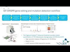 New RNA tools for optimized CRISPR/Cas9 genome editing