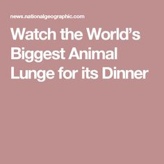 Watch the World's Biggest Animal Lunge for its Dinner