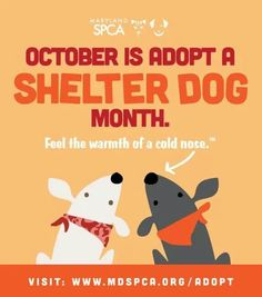 Please adopt, don't buy. There are so many sweet dogs, cats, & other pets at shelters waiting for a loving forever home!