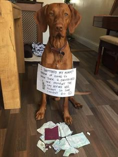 New ideas for funny dogs confessions pets Silly Dogs, Cute Funny Dogs, Cute Funny Animals, Funny Pets, Vizsla Puppies, Cute Puppies, Weimaraner, Vizsla Funny, I Love My Mum