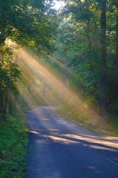 Sunlight Breaking Through Trees
