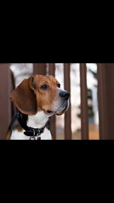 🐶 Boxer Mix, Smile Everyday, Beagle Puppy, Make Me Smile, Puppies, Beagles, Dogs, Cute, Animals