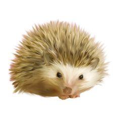 Beautiful hedgehog painting