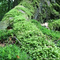 Natur-Fotos von einem Ausflug in den Wald