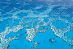 The magnificent Great Barrier Reef, Australia.