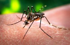 26 January 2016.  Costa Rica is included in travel warning list following report of first Zika virus case.