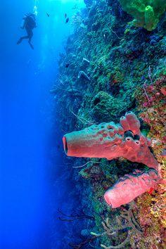 Bloody Bay Wall, Little Cayman Island