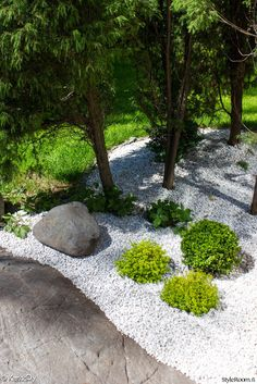 puksipuu,japanilainen puutarha,kivipuutarha,kekkilä,koristekivi,valkoinen,valkoinen sisustuskivi,puutarha,kallio,piha,istutus