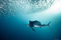 St Johns, South Africa.  Photo by Alexander Safonov