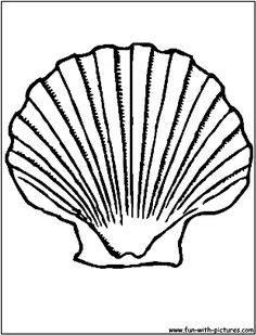 1000 images about rocks shells for mike on pinterest for Shells coloring page