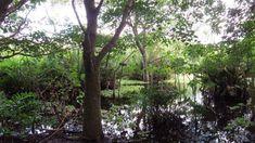 Conozca el Parque Urbano de Preservación Ecológica Curichi la Madre cuya entrada esta por el 4 anillo de la ciudad de los anillos Santa Cruz de la Sierra Bolivia, Plants, Blog, Urban Park, Entryway, Parks, Rings, Cities, Planters