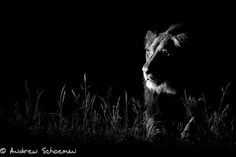 Shot in the Dark by Andrew Schoeman on 500px