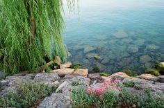 Passeggiata Bardolino-Garda con vegetazione - 2012 Foto di Alba Rigo