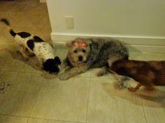 Fica Cãomigo: Fiona, minha amadalindafofa, tá dodói.