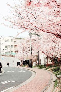 cherry blossom in japan suburbia Aesthetic Japan, Japanese Aesthetic, Aesthetic Backgrounds, Aesthetic Wallpapers, Natur Wallpaper, Cherry Blossom Japan, Cherry Blossoms, Japan Travel, Aesthetic Pictures