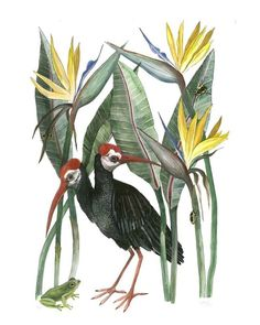 Ibis and Strelitzias by Georgina Taylor Nature Illustration, Illustration Artists, Botanical Illustration, Watercolor Illustration, Watercolor Paintings For Sale, Watercolor And Ink, Watercolor Flowers, African Animals, Wildlife Art