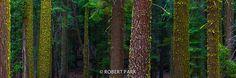 Living Forest-RobertPark http://www.robert-park.com