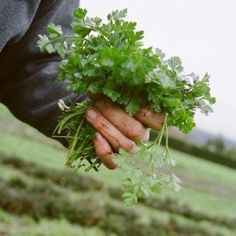 Cultivating a new generation of farmers and food leaders.