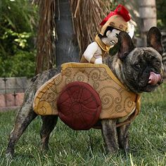 Our readers had a fun time dressing up their pets in spooktacular pet Halloween costumes! Pet Halloween Costumes, Dog Halloween, Dog Costumes, Halloween Party, Gladiator Costumes, Pet Parade, Dog Accessories, French Bulldog, Pup