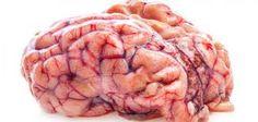 ما هي الأشياء التي تدمر الدماغ كيفية تقوية الدماغ وجعله يعمل بطريقة جيدة