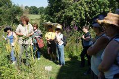 Découvrez l'univers des plantes tinctoriales du Plateau de Millevaches auprès de Thierry Thévenin, botaniste et herboriste reconnu.