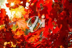Autumn Leaves Background, New Media, Beautiful Images, Royalty Free Images, Sunny Days, Clip Art, Colours, Mood, Painting
