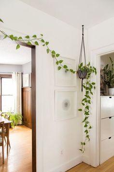Tendance : on craque pour les vignes d'appartement !